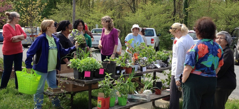 Greenbelt's Plant Swap