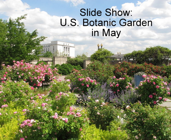 U S Botanic Garden In May Dc Gardens