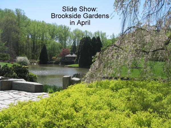 Brookside Gardens in April | DC Gardens