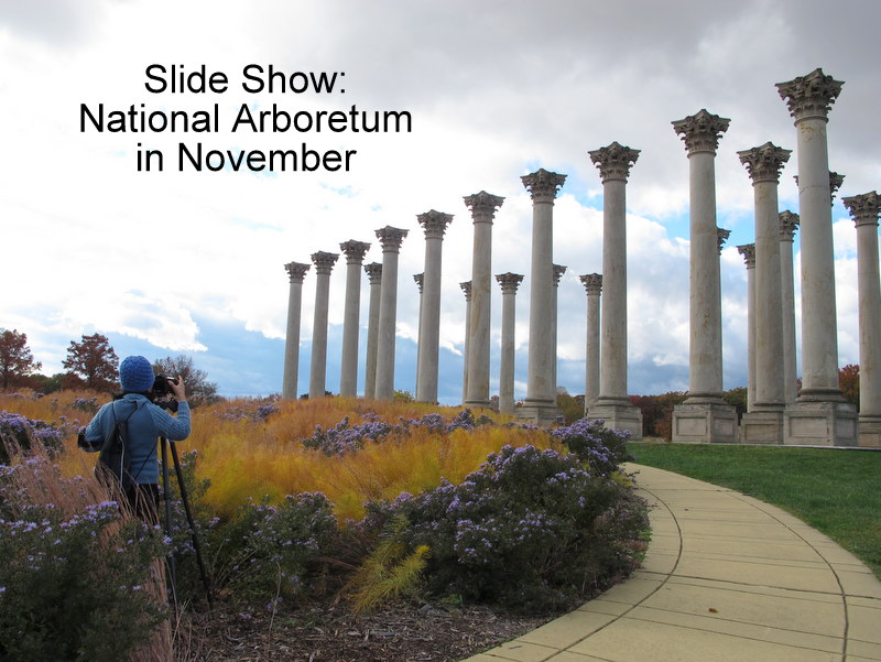National Arboretum In November Dc Gardens