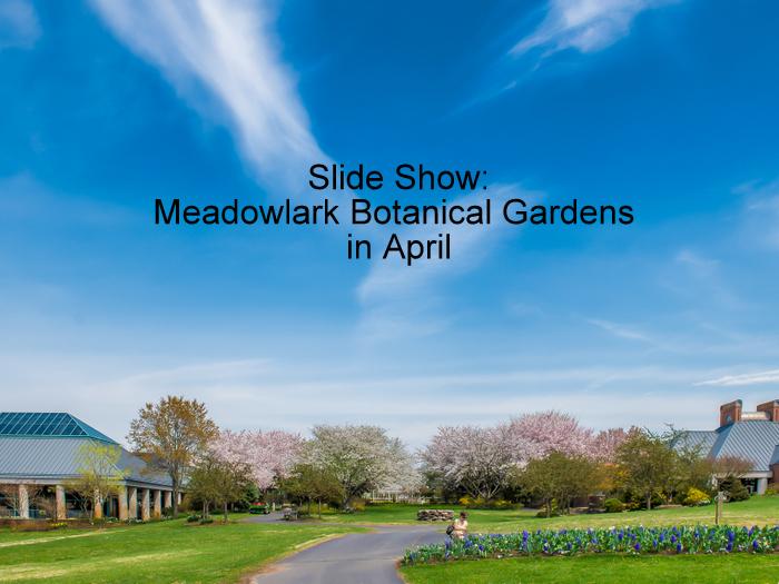 Meadowlark botanical gardens in april dc gardens Meadowlark botanical gardens events