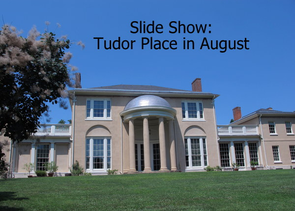 Tudor Place In August Dc Gardens