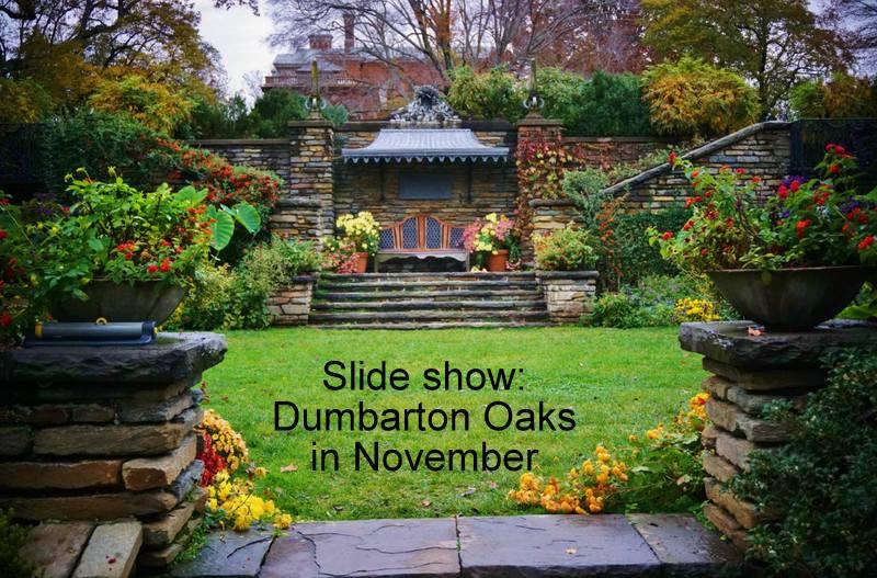 Dumbarton Oaks in November   DC Gardens
