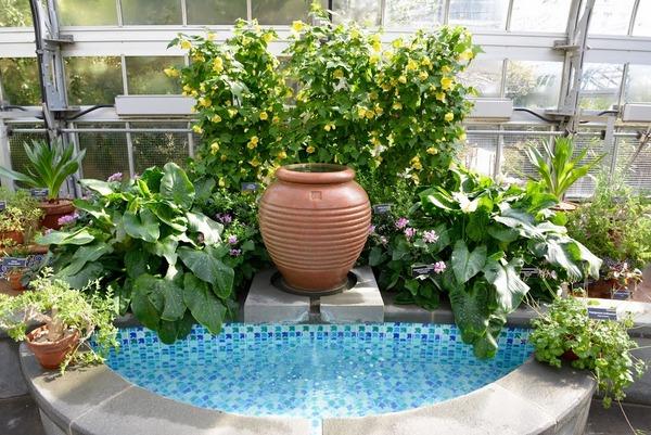 Mediterranean Room, U.S. Botanic Garden 5