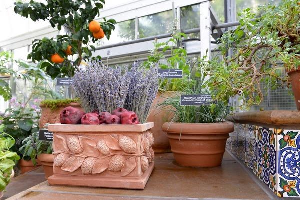 Mediterranean Room, U.S. Botanic Garden 6