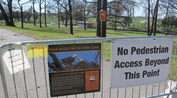 Seeing Azaleas AND Eagles At The National Arboretum DC Gardens - Us national arboretum google maps