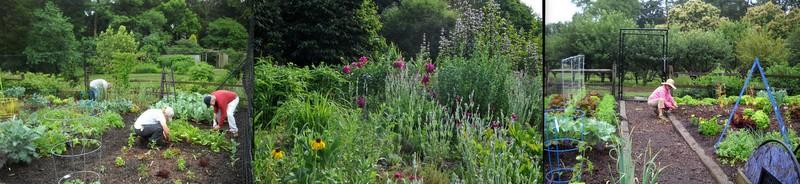 Fairfax GS Garden8