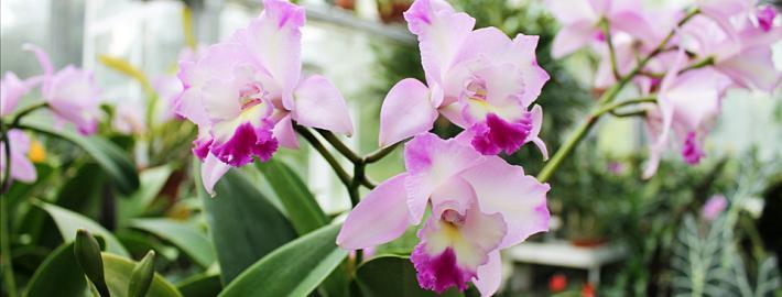 Orchid Month LP Hero