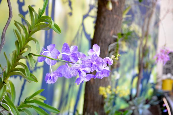 Orchids in Focus exhibit, U.S. Botanic Garden